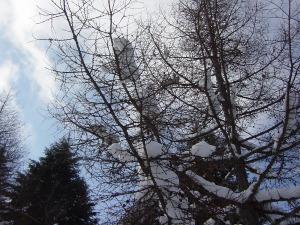 2011年1月入笠山